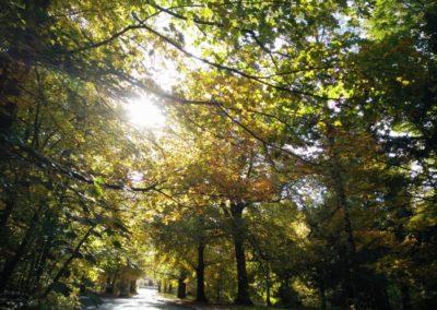Sinologie-Goettingen-Herbst-01
